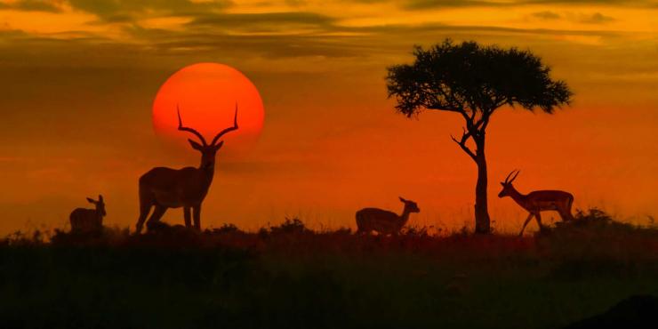 Rustige en comfortabele fietsvakantie in Zuid-Afrika: van Kruger National Park tot Kaapstad in 14 dagen